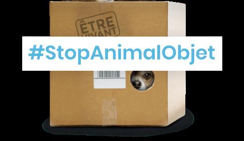 https://adfinitas-statics-cdn.s3.eu-west-3.amazonaws.com/spa/2020-stopanimalobjet/email+2/header+chien+stopanim.png